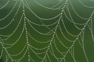 Spider web with morning dew