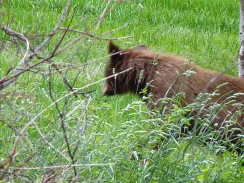 Bear 019