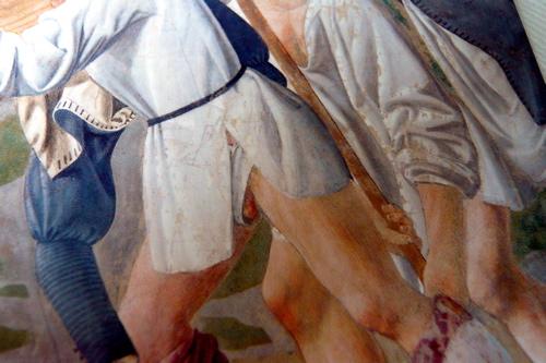 Pierodellafrancescascrotum