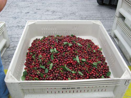 Cherries2010 031