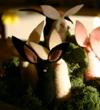 Cynthia Treen - Rabbits